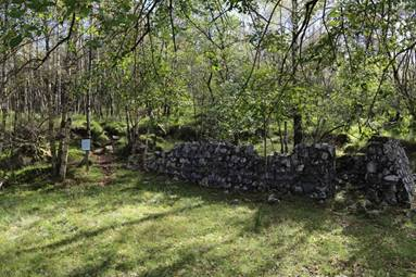 A stone wall in a forest  Description automatically generated with low confidence